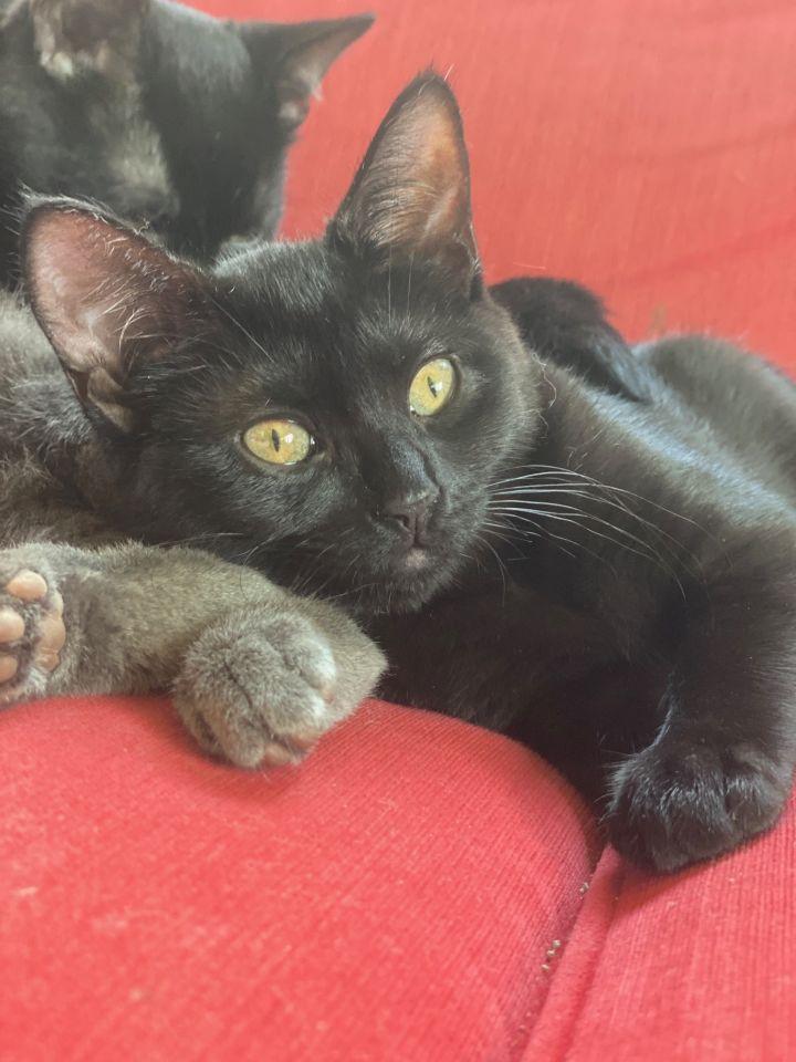Tiny (Tow kittens) 3