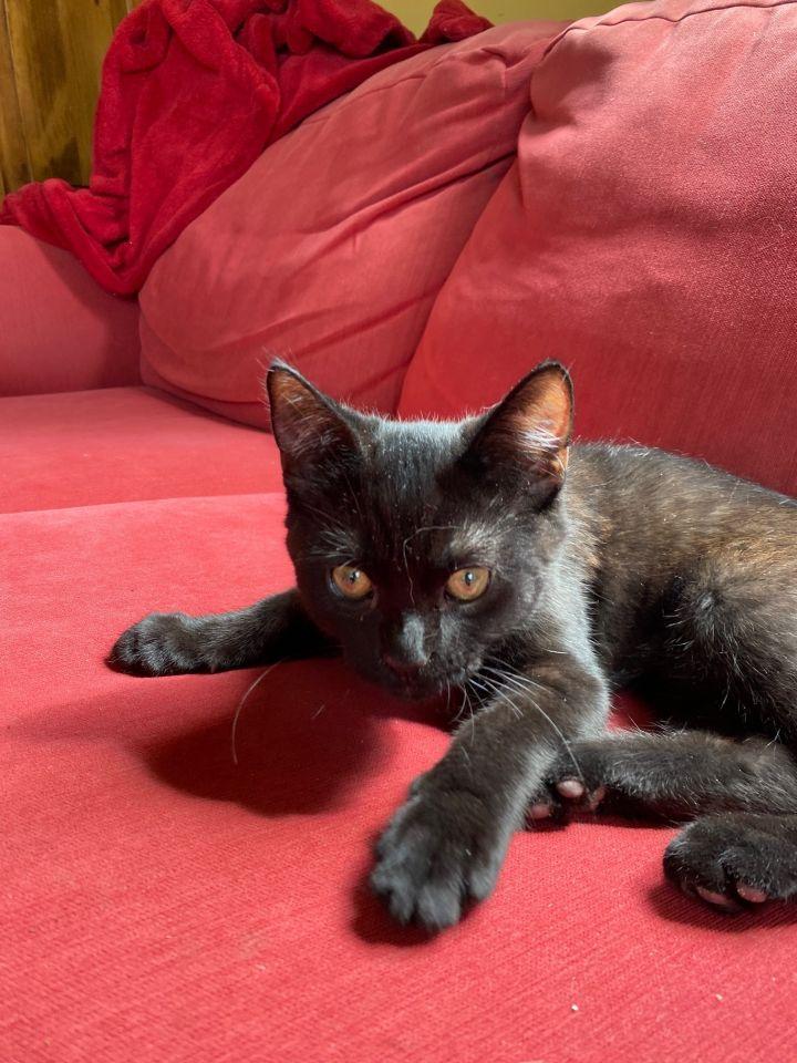 Tiny (Tow kittens) 4