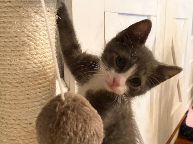 Myles (Lane kittens) 3