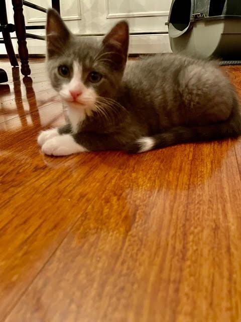 Myles (Lane kittens) 4