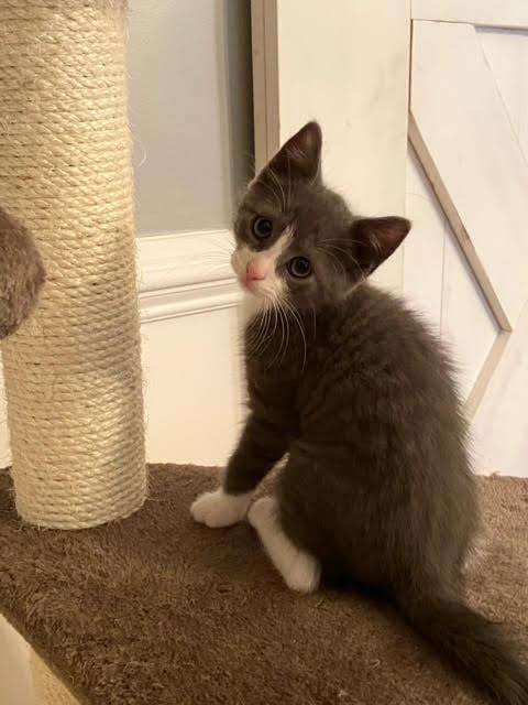 Myles (Lane kittens) 5