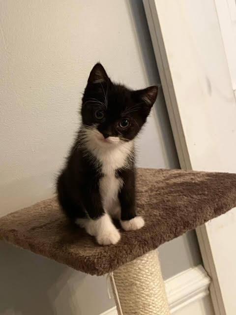 Ziggy (Lane kittens) 2