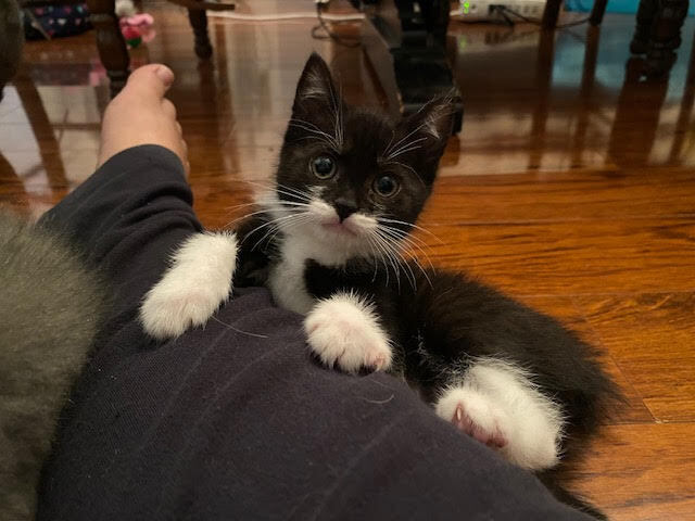 Ziggy (Lane kittens) 3