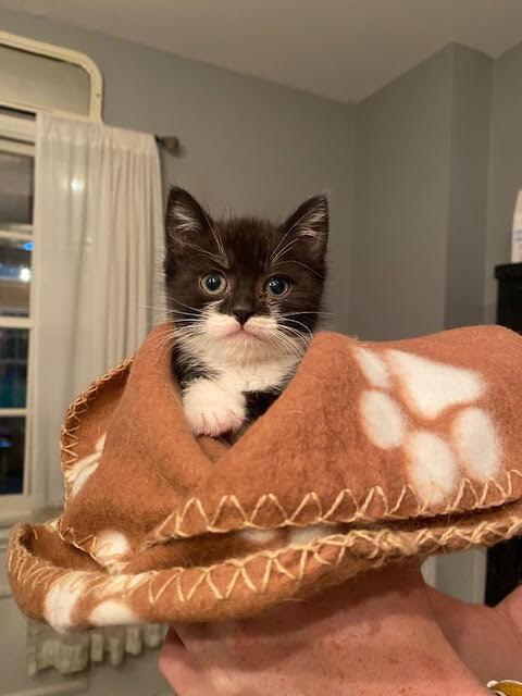 Ziggy (Lane kittens) 4