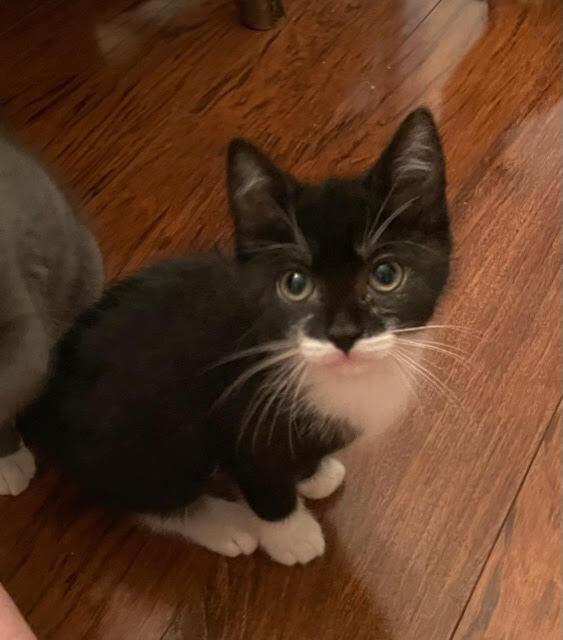 Ziggy (Lane kittens) 1