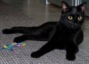 Beautiful Bella would love to be your new BFF This 2-year-old was rescued from the streets by a goo