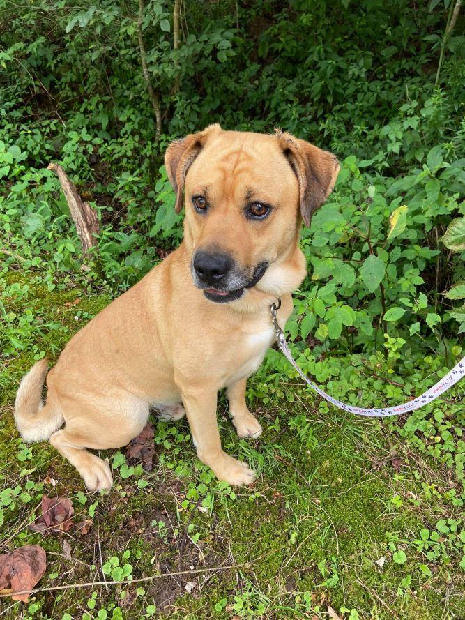 Gunner (foster to adopt)