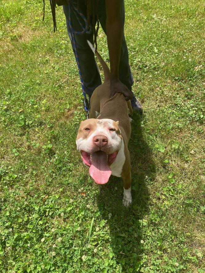 Bruno (foster to adopt)