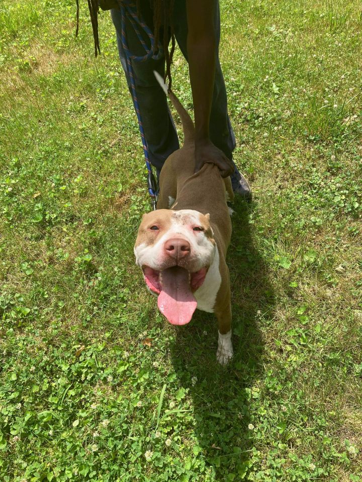 Bruno (foster to adopt) 1