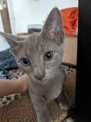 Im Oliver the super chatty but well behaved runt of my litter Im not sure