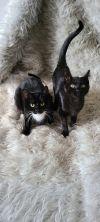Teller & Pinkie (Bonded Pair)