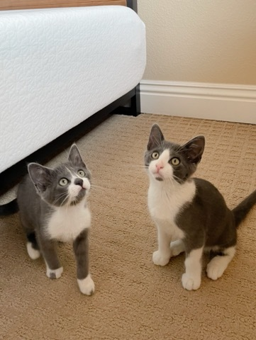 Freddie and Stella