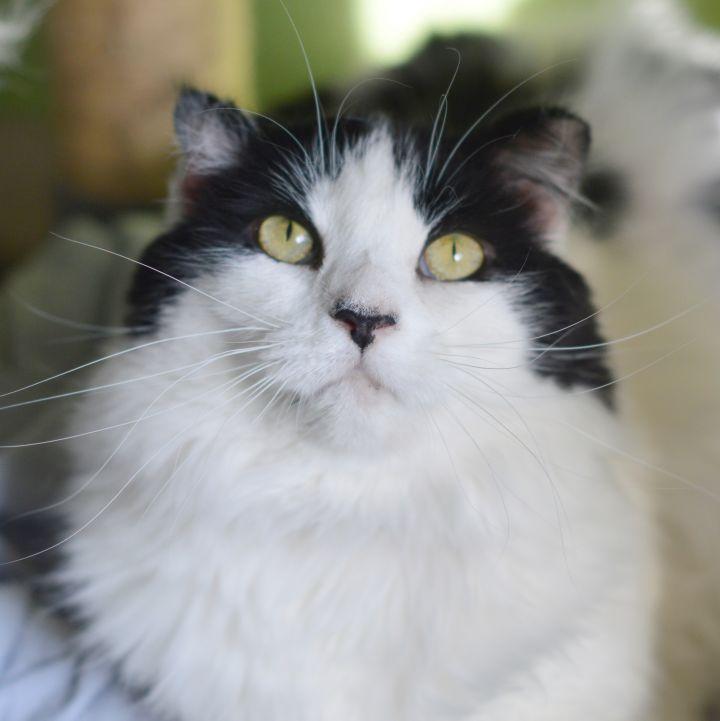 Sophie 2