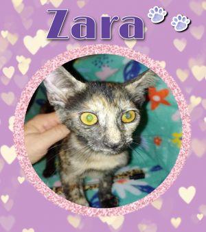Zara Tortoiseshell Cat