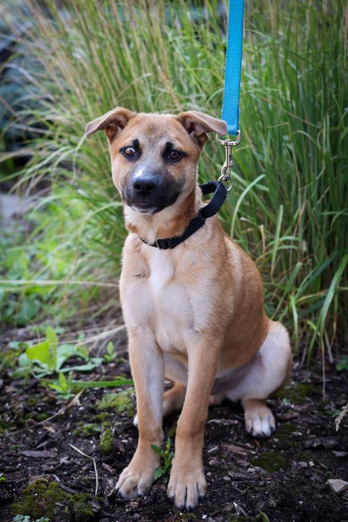 Dog for adoption - Gerber - **MEDICAL - FOSTER TO ADOPT ...