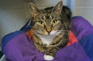Tortellini is a 2 year old spayed female She was found as a local stray with her 5 kittens Tortell
