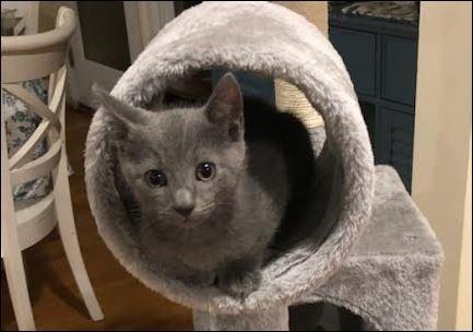 Clover 2 - Greta kitten #1 - in foster