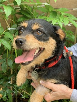 Smores is a friendly happy puppy Just like your namesake treat she is sweet as can be Smores wa