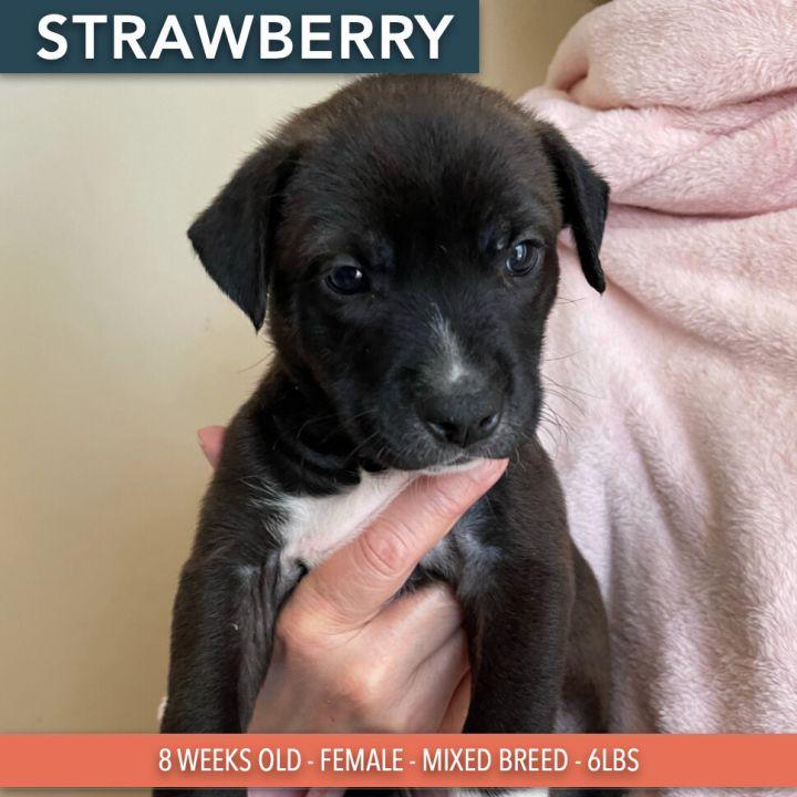 Strawberry Sorbet 1
