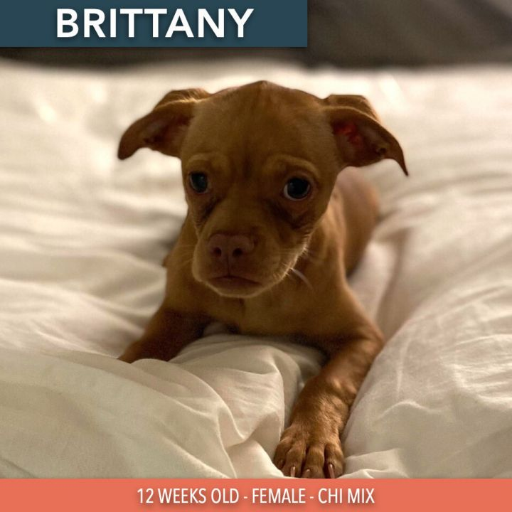 Brittany 1