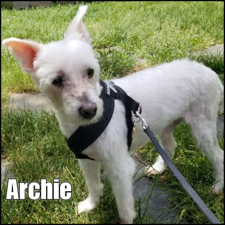 Archie 1