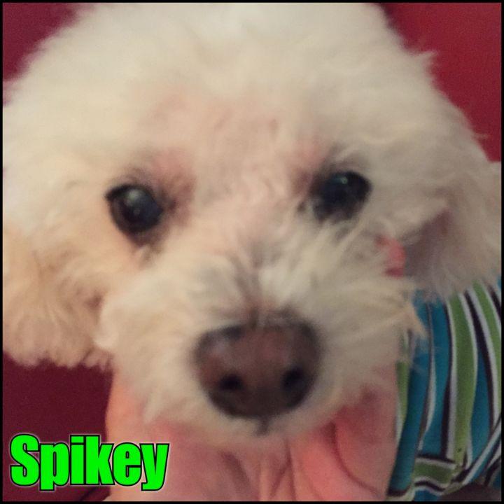 Spikey  1