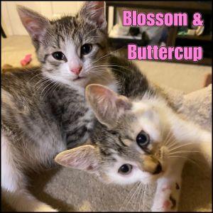 Blossom & Buttercup
