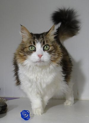Princess is absolutely gorgeous very gentle and sweet She is overweight and currently on a limite