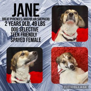 Meet Jane a 25 year old 49lb Great PyreneesAnatolian Shepherd mix Jane LOVES people and belly