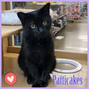 Patticakes is a sweetheart who adorably drools from relaxation and content when you pet her and giv