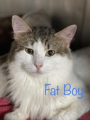 Fatboy 1
