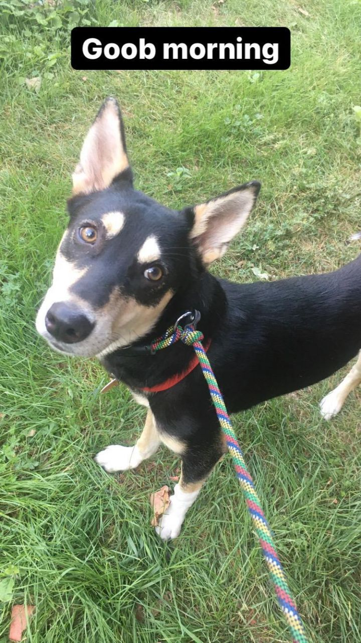 Dasher (needs a home with a dog) 4