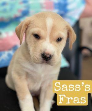 Sassa Fras