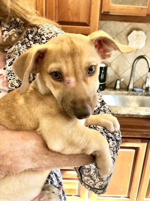 Ergos and Eragon Beautiful brothers  Medium Mixed breed boys from the streets of Puerto Rico In a