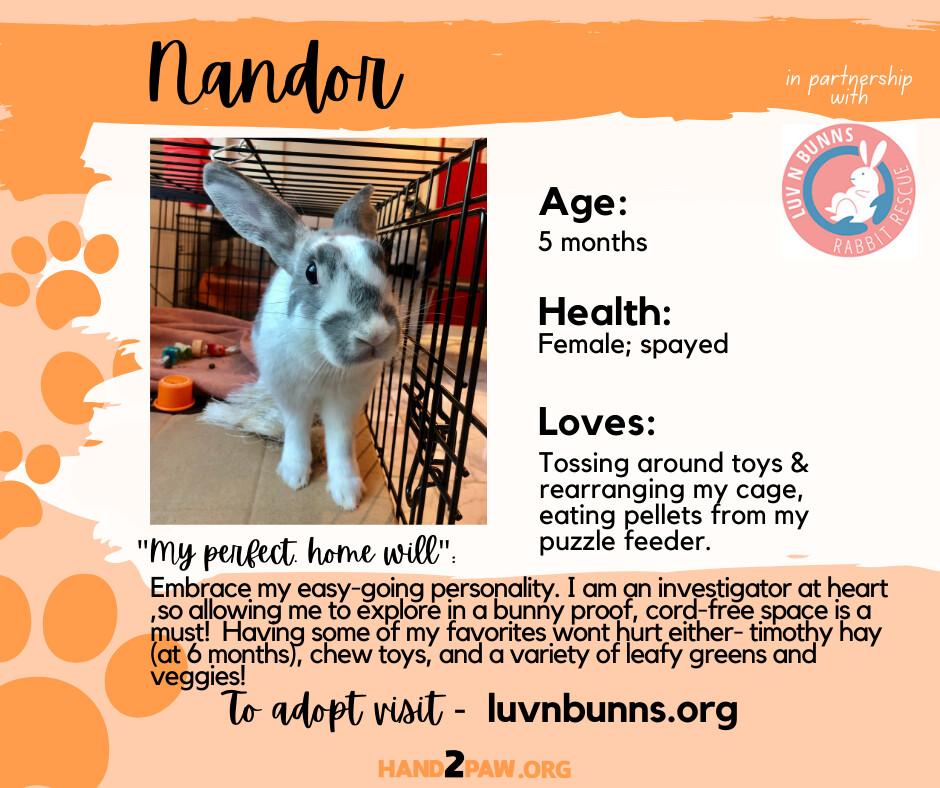 Nandor detail page