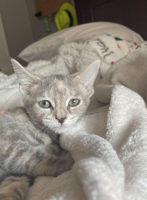 Meet Dolly This shy girl is a love once she gets to know you She has two beautiful sisters that