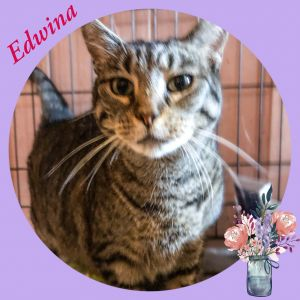 Edwina is a purr machine who wants you to be by her side She loves treats and will eat them