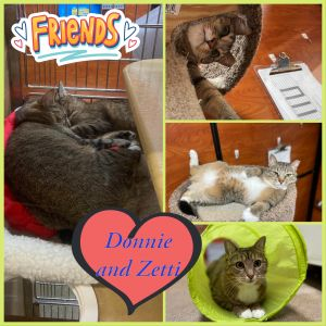 Meet Donni and Zetti This beautiful sweet bonded pair are curious gentle and playful They are be