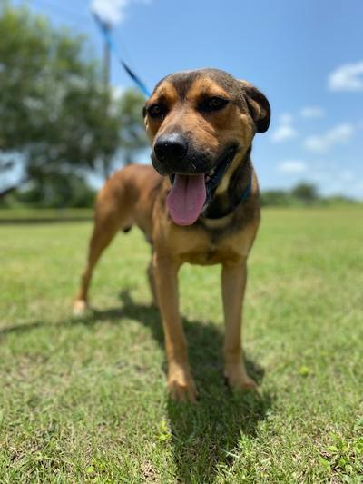 Rusty - fostered in Austin TX 3