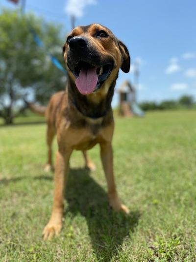 Rusty - fostered in Austin TX 4