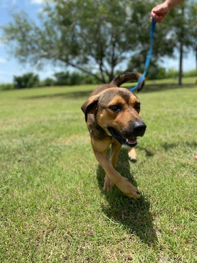 Rusty - fostered in Austin TX 6