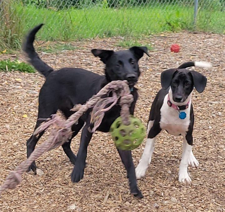 Nala Beagle (with Nadia-Mom) 3