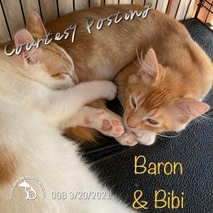 Bibi & Baron