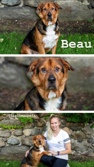 TO APPLY GO TO wwwLuckyDogRefugecom Meet Beau our big dog who thinks he is a lap dog At 4 year