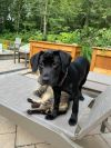 Shelby-adoption pending