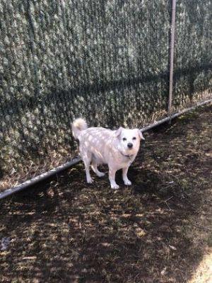 Rusty Mixed Breed Dog