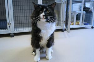 Sparrow is a 4 year old long haired neutered male He is outgoing and affectionate For more informa