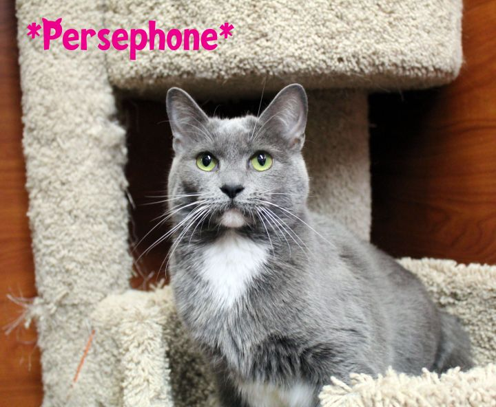 Persephone 1
