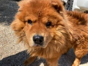 Teddy is a good good boy He is 4 years old He is a little shy as we just saved