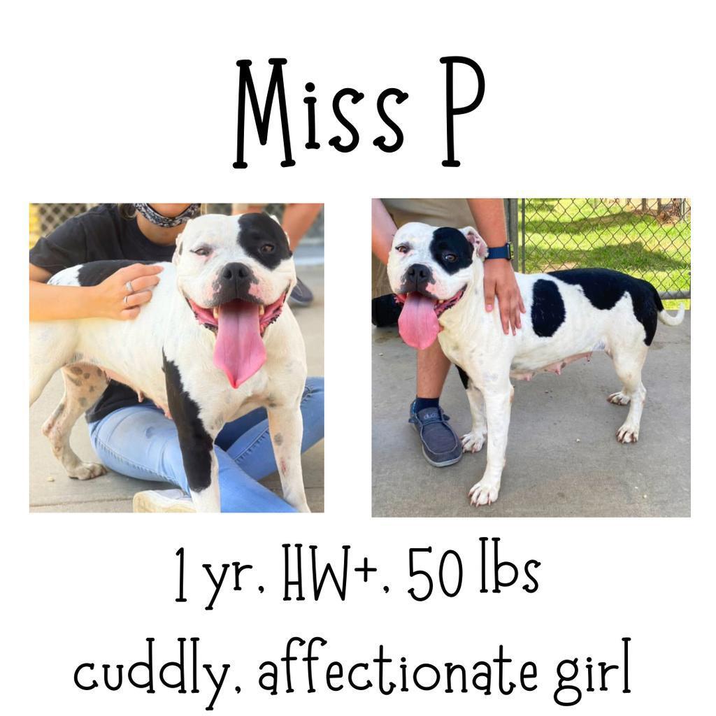 Miss P